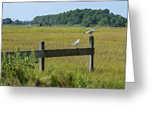 Two Birds On A Fence Greeting Card