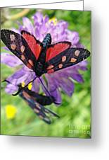 Two Black And Red Butterflies Greeting Card