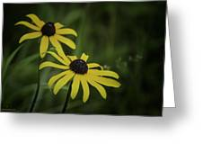 Two Black Eyes On The Macomb Orchard Trails Greeting Card