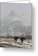 Two Black Horses In The Snow   #7983 Greeting Card