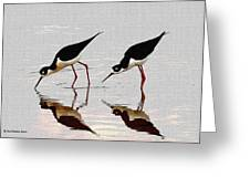 Two Black Neck Stilts Eating Greeting Card