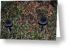Two Black Stools Greeting Card