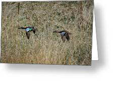 Two Blue Winged Teal Greeting Card