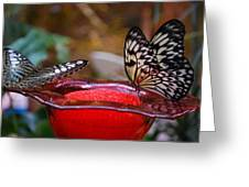 Two Butterflys Greeting Card