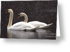 Two Christmas Swans A Swimming Greeting Card