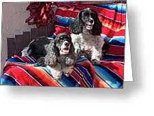 Two Cocker Spaniels Together Greeting Card