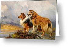 Two Collies Above A Lake Greeting Card