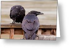 Two Common Ravens Corvus Corax Interacting Greeting Card