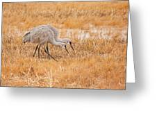 Two Cranes In The Field Greeting Card