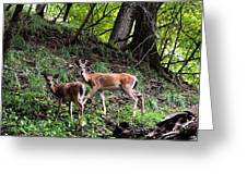 Two Deer Greeting Card