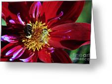 Two Different Bees Sharing  Greeting Card