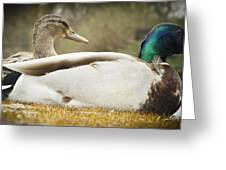 Two Ducks Greeting Card