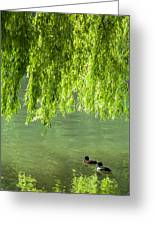 Two Ducks On Pond Greeting Card
