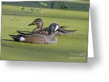 Two Ducks Passing By Greeting Card