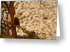 Two Eagles Hanging Out In Their Nest Greeting Card