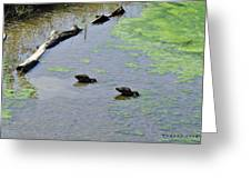 Two Eating Ducks Greeting Card