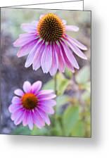 Two Echinacea Greeting Card