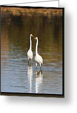 Two Egrets In The Pond Greeting Card