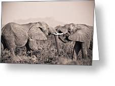 Two Elephants Greeting Card