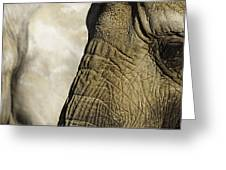 Two Elephants' Eyes Greeting Card