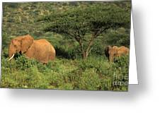 Two Elephants Walking Through The Grass Greeting Card