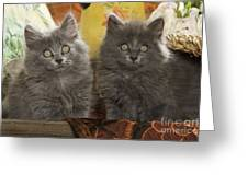 Two Fluffy Kittens Greeting Card