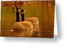 Two Geese In A Line Greeting Card