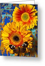 Two Golden Mums With Butterfly Greeting Card by Garry Gay