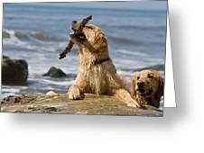 Two Golden Retrievers Playing Greeting Card
