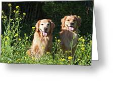 Two Golden Retrievers Sitting Together Greeting Card
