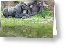 Two Gorillas Relaxing II Greeting Card