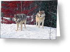 Two Gray Wolves Greeting Card