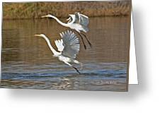 Two Greater Egrets  Greeting Card