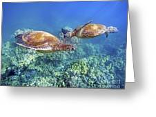 Two Green Turtles Greeting Card