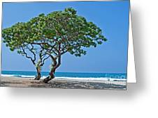 Two Heliotrope Trees On Tropical Beach Art Prints Greeting Card