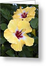 Two Hibiscus Greeting Card
