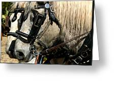 Two Horse Power Greeting Card