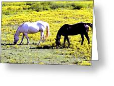 Two Horses Grazing Greeting Card