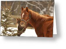 Two Horses In Winter Day Greeting Card