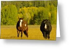 Two Horses Walking Along Greeting Card