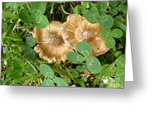 Two In Clover Greeting Card