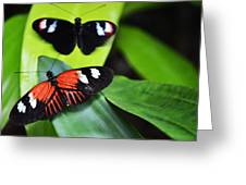Two In The Leaves Greeting Card