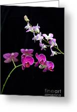 Two Kind Of Orchid Flower Greeting Card