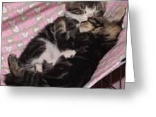 Two Kittens Sleeping Greeting Card