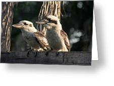 two Kookaburra Greeting Card