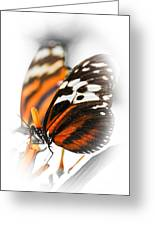 Two Large Tiger Butterflies Greeting Card