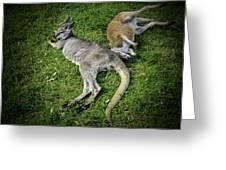 Two Lazy Kangaroos Lying Down Greeting Card