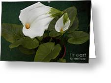 Two Lilies Greeting Card