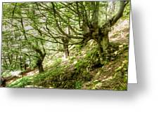 two little brothers Chasing Fairies in theBeech Forest on a summer day Greeting Card