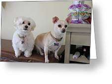 Two Little Dog Greeting Card